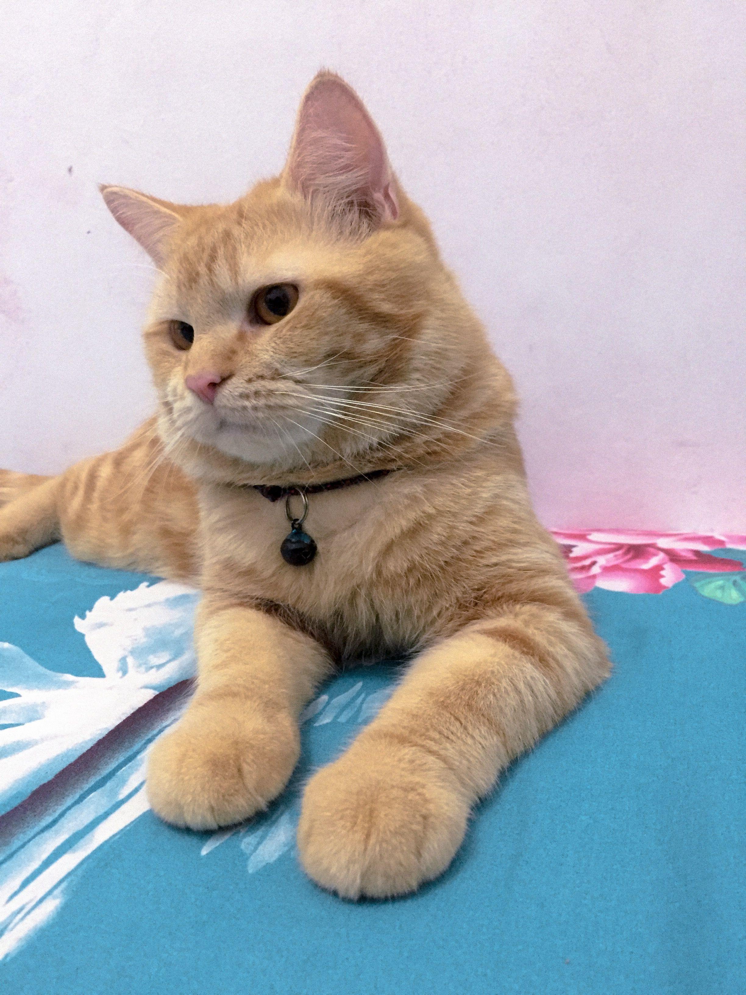 Pin Oleh Aida Di Picture By Me Wallpaper Kucing Wallpaper Iphone Kucing Lucu