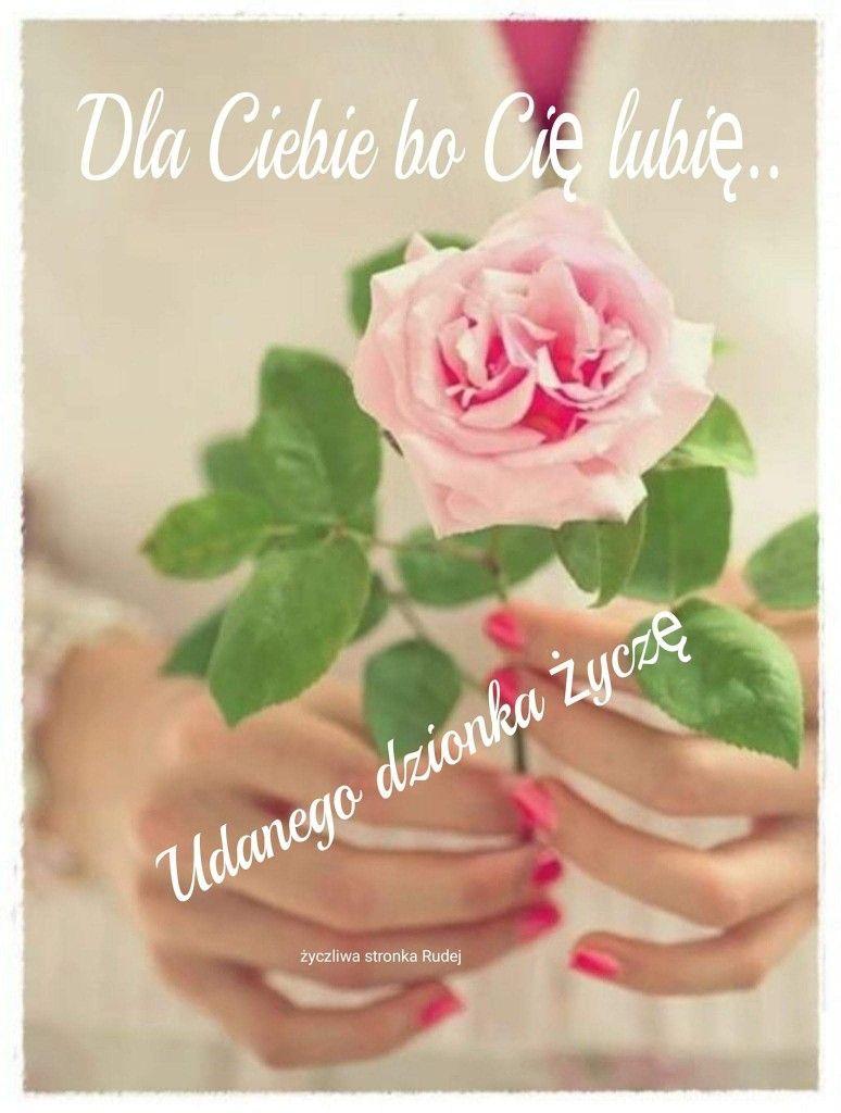 Pin By Ilona Sienkiewicz On Dla Ciebie Flowers Rose Plants