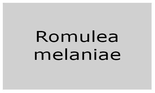 Romulea malaniae