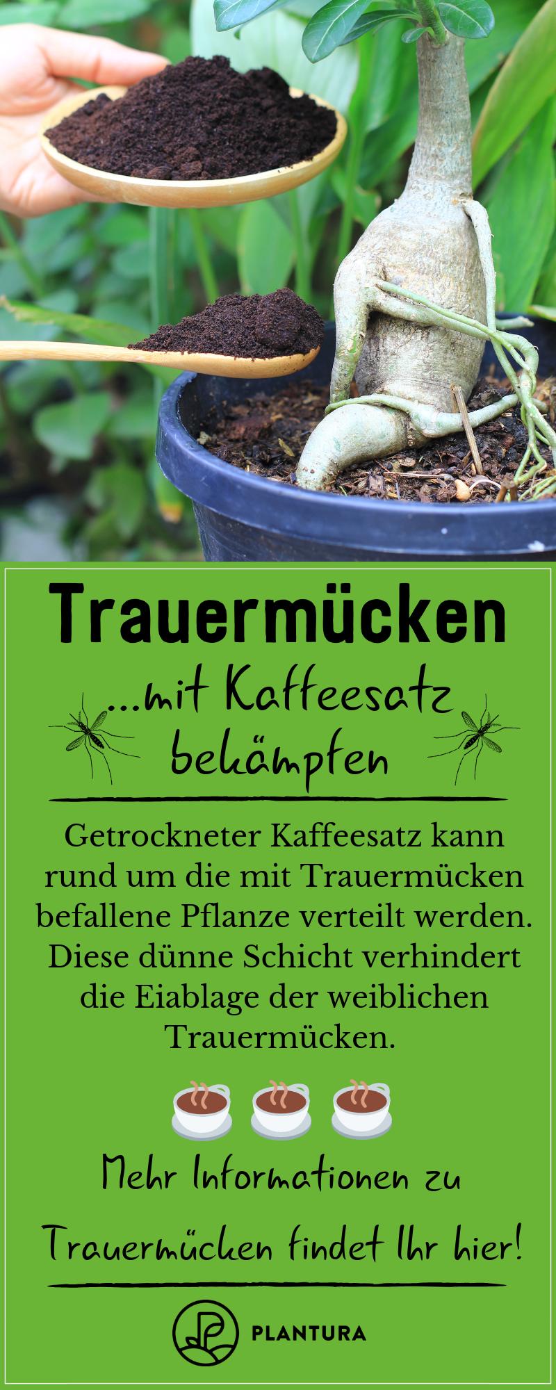 Trauermucken Mit Hausmitteln Bekampfen Plantura Trauermucken Hausmittel Schadlinge Im Garten
