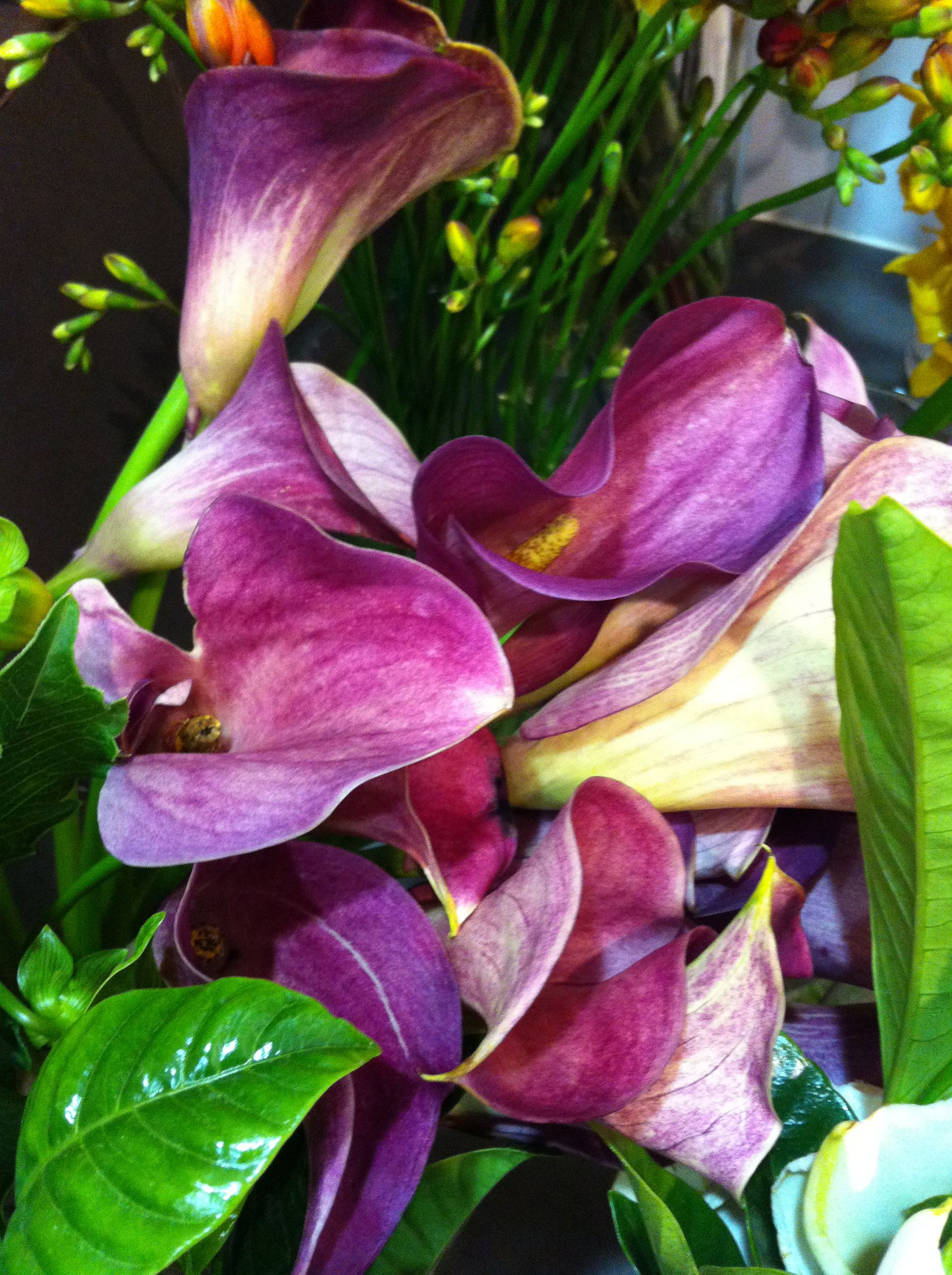 Purple Peace Lilies Too Purpley Pinterest Lily Calla Lily