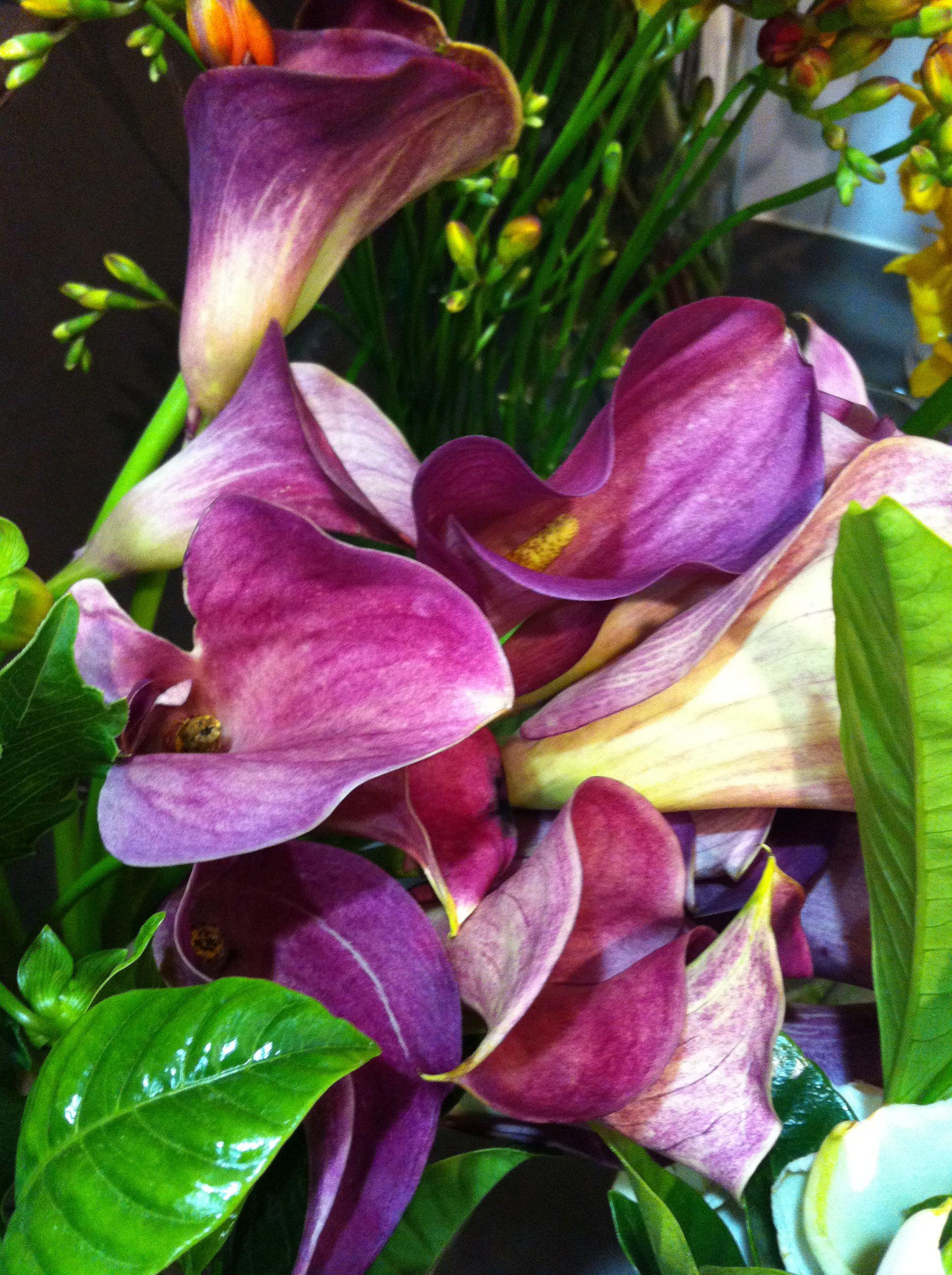Purple peace lilies? | Too Purpley | Pinterest | Purple ...