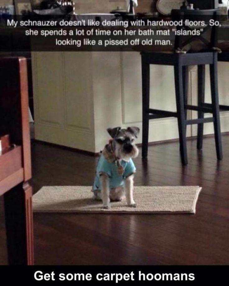 Photo of Get a carpet, man … – #Get #humour #human #man #you #you