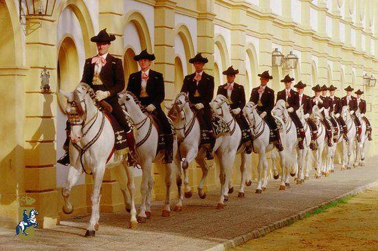 Fundacion Real Escuela Andaluza Del Arte Ecuestre Paarden Spaans
