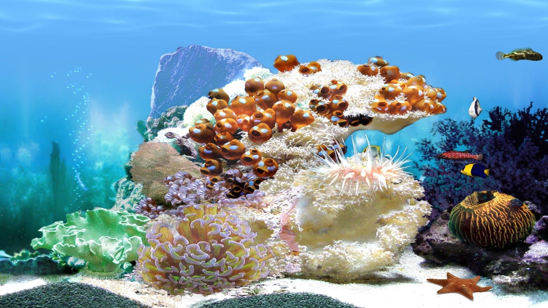 Beautiful Free Wallpaper Aquarium 3d Di 2020