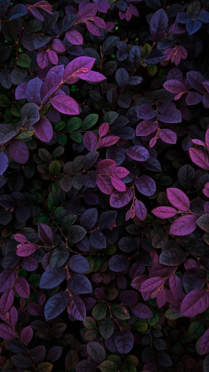 Nature Foliage Plants Wallpaper - iPhone Wallpapers