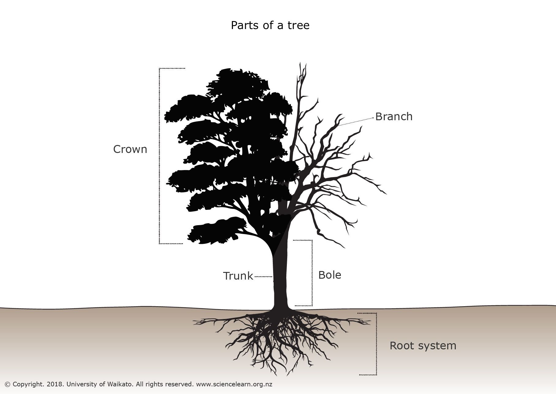 hight resolution of parts of a tree diagram this diagram labels the main parts of a tree the particular shapes and sizes of the parts may be in different proportions in