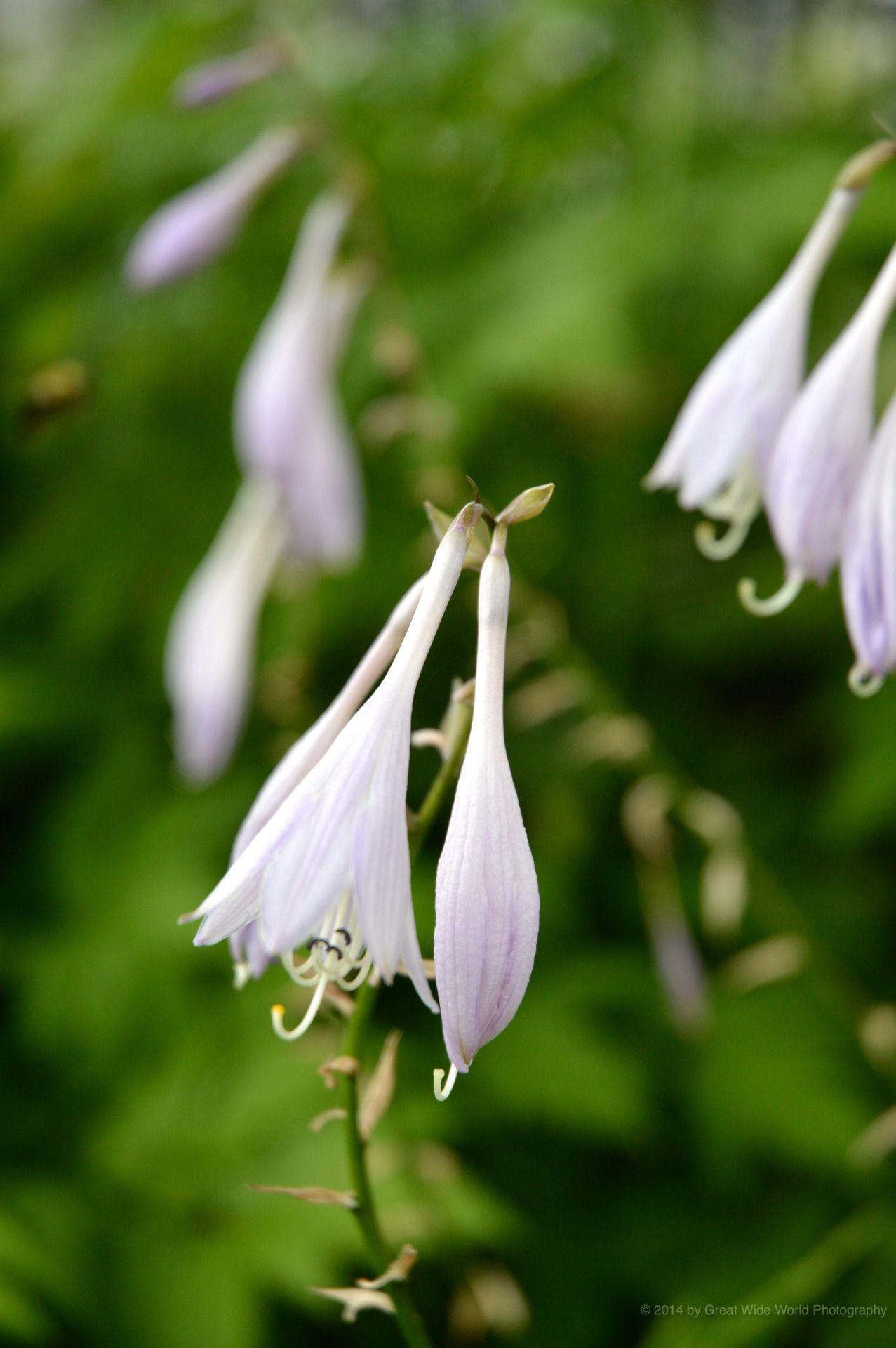 17 best ideas about fleurs livrer on pinterest coccinelle insecte sorte d oiseau and photo - Larve de coccinelle ...