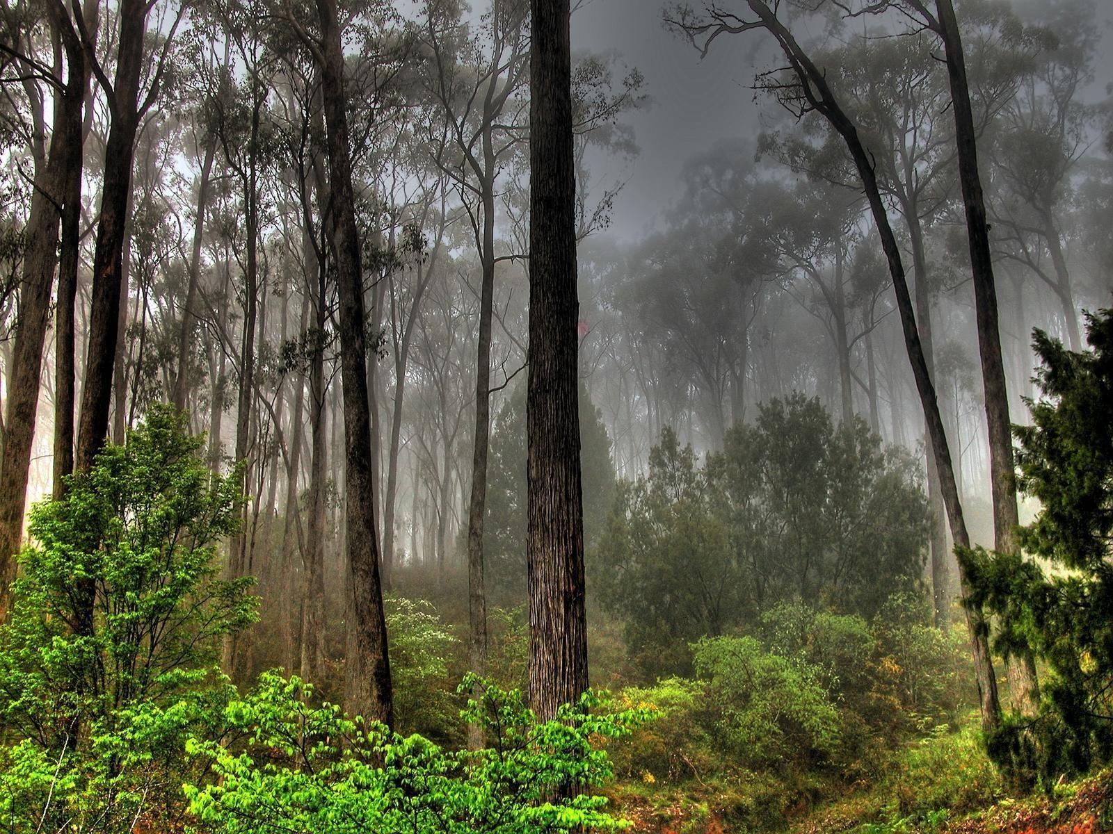 Fire In The Australian Bush Forest Landscape Nature Photography Landscape Wallpaper