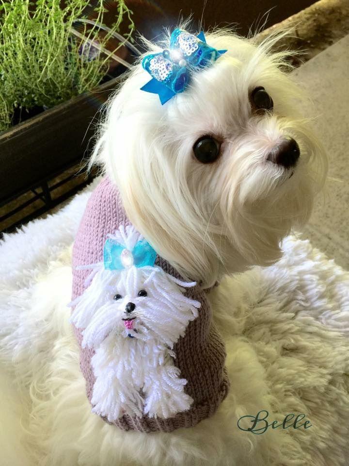 Pin Em Chiwowow Dog Clothing