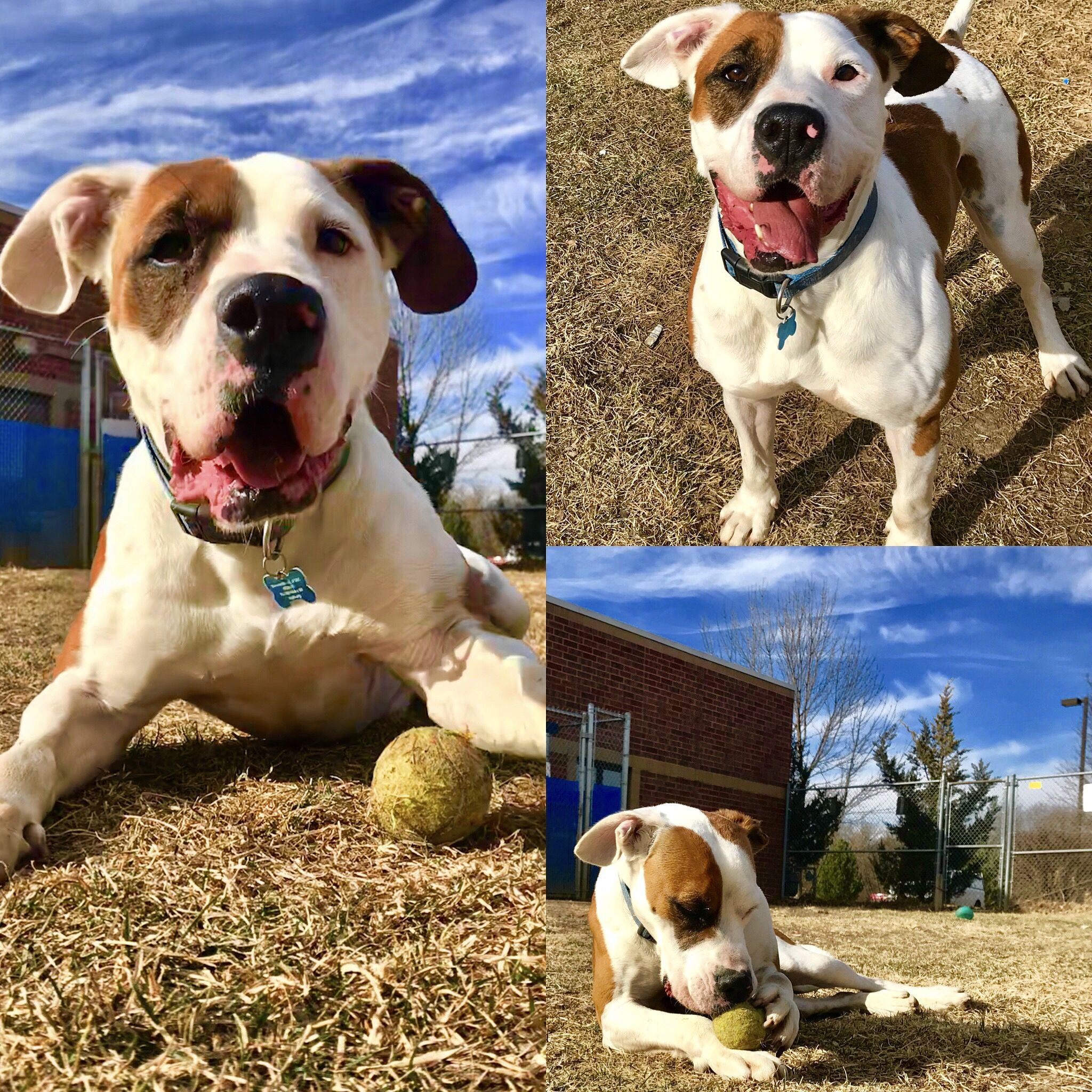 SOS Groot is available for adoption through Humane