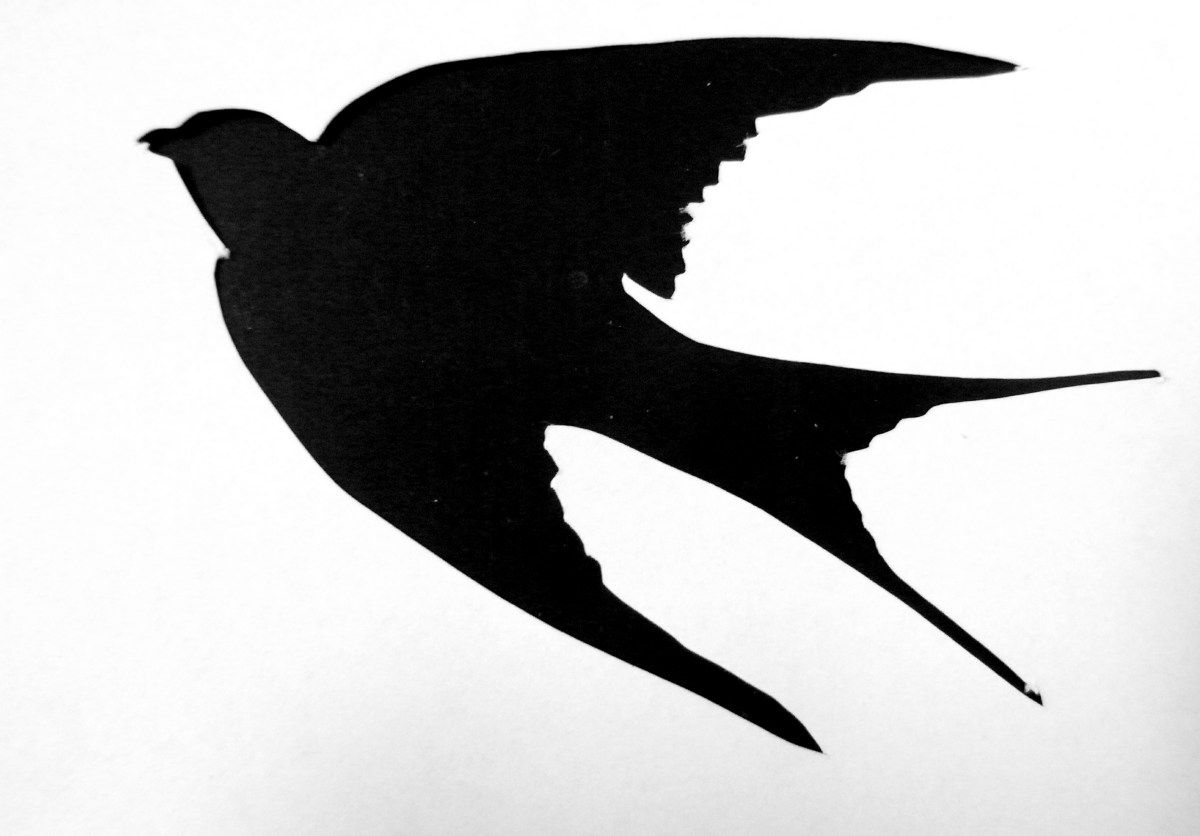 Saraccino It Takes More Than One Swallow To Make A Summer
