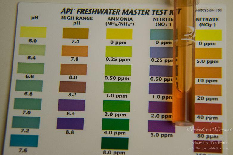 Api Freshwater Master Test Kit Showing Tapwater Nitrates At 20 Ppm Fresh Water Freshwater Aquarium Test