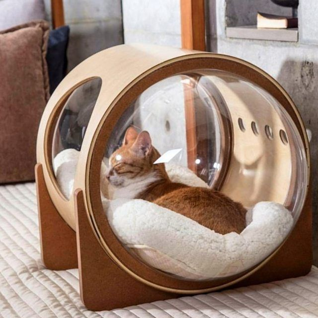 Lits pour chats modernes drôles chats mignons animaux drôles animaux adorables beaux chats commentaire ps
