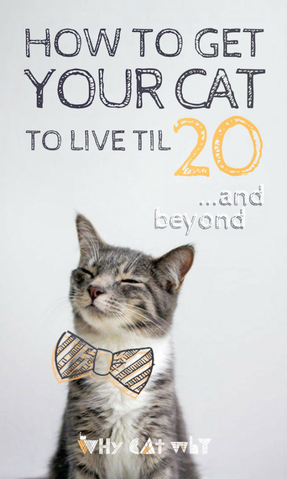 How To Get Your Cat To Live Until 20 And Beyond Cat Care Cat Facts Cat Training