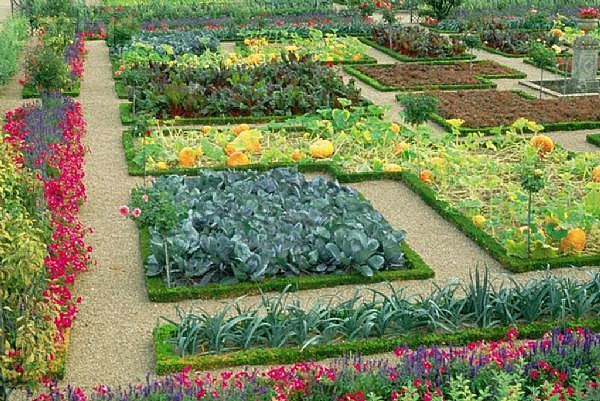 flower vegetable garden layout ideas