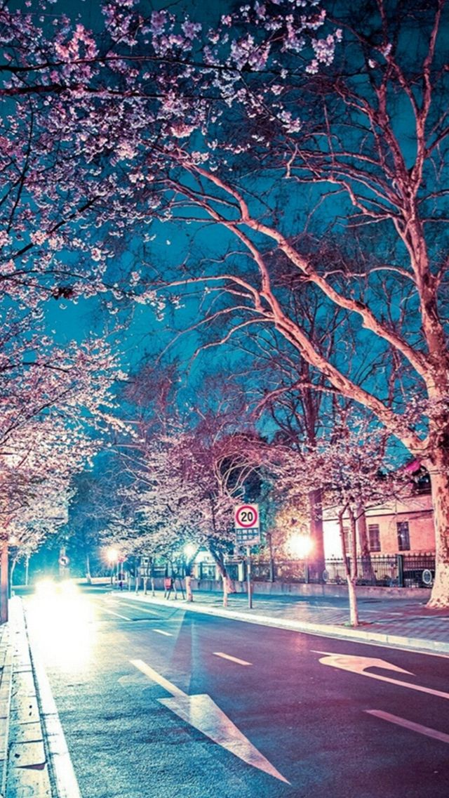 Japanese Street Cherry Blossom Night Scenery Iphone 5s Wallpaper Download Iphone Wallpapers Ipad Wallpa Night Scenery Cherry Blossom Wallpaper Anime Scenery
