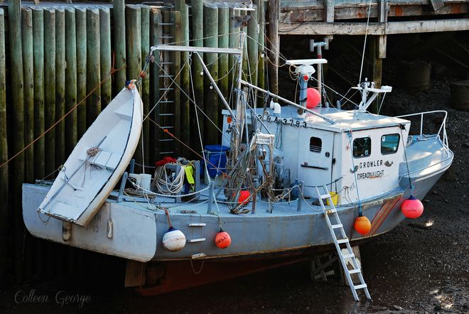 Growler Dreadnaught at low tide, Hall's Harbour. Always amazing to think the tides determine whether a fisherman uses a ladder to climb out of the boat onto the wharf, or one to climb out of it onto the exposed harbour floor!