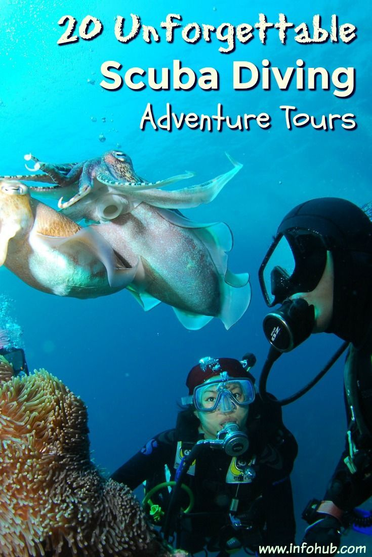 Scuba Diving Tours And Charters: Surf Through Myriads Of