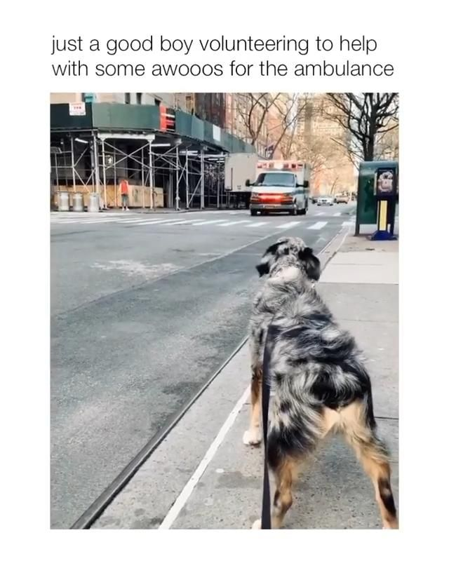 Just a good boy volunteering to help with some awo