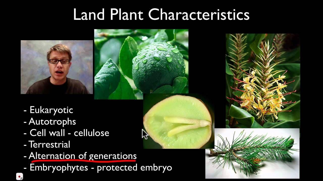 Bozeman Plant Structures