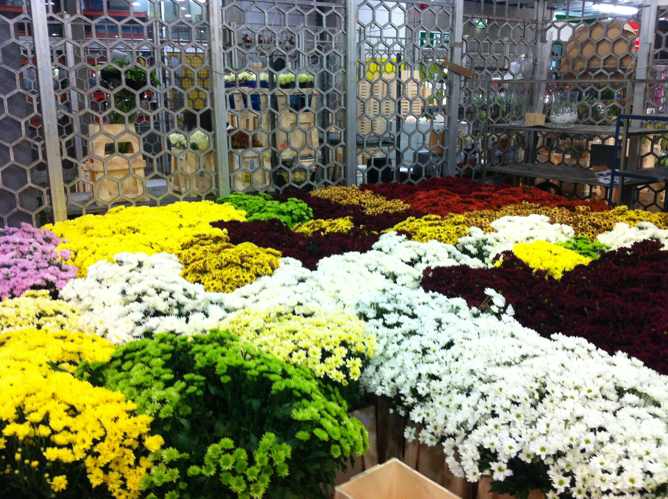 Flowers ready for the UK\'s largest bouquet | The UK\'s biggest ...