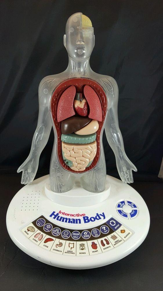 Interactive Human Body Buttons Information Organs Quiz ... | 562 x 1000 jpeg 72kB