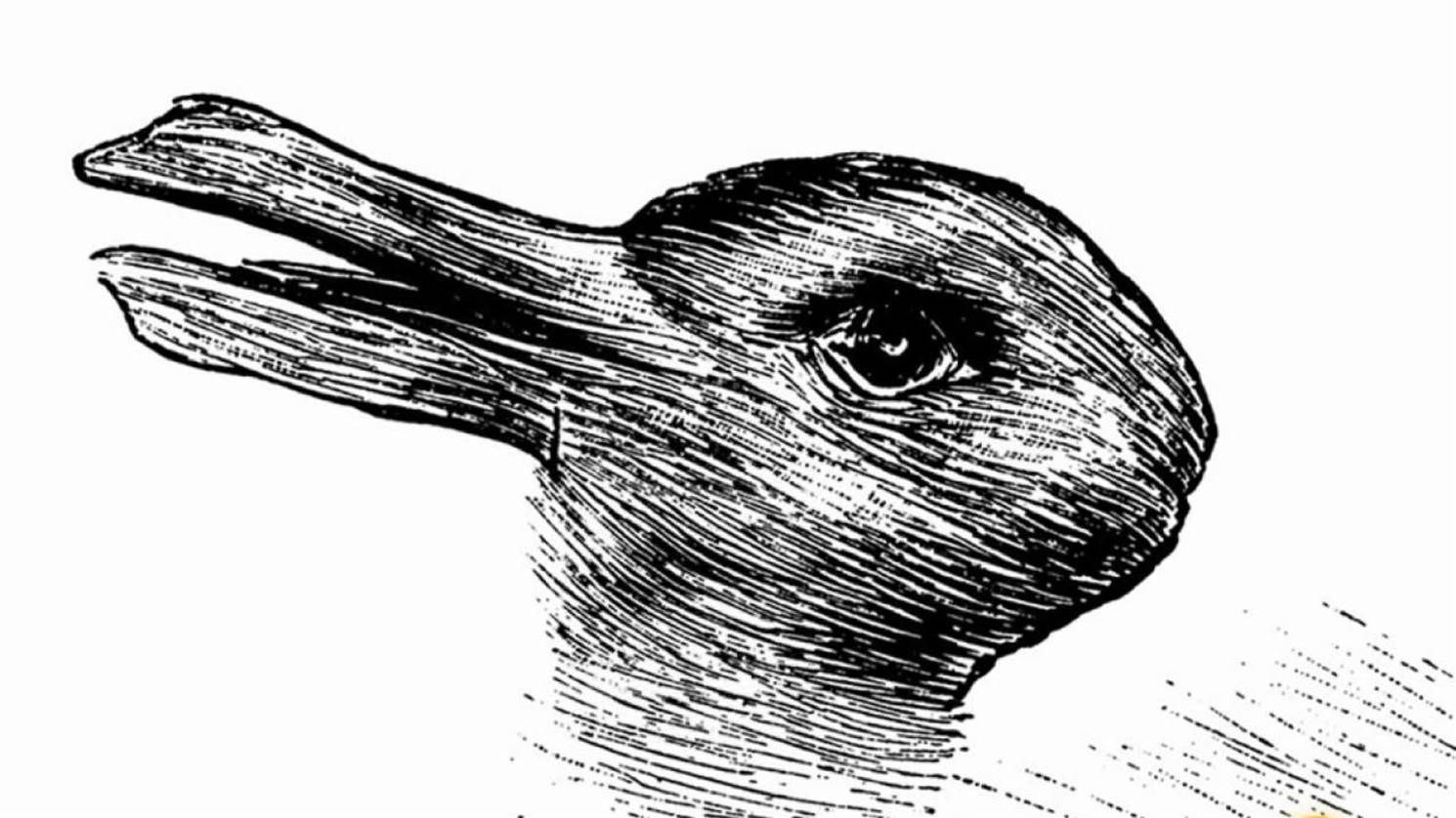 Do You See A Rabbit Or A Duck Here S What Your Answer Says About You