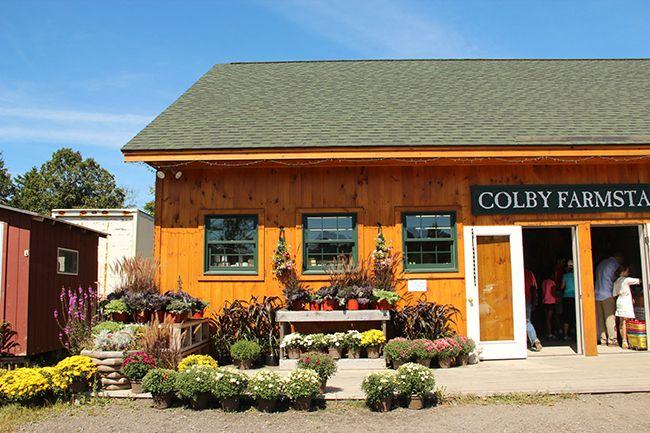 Los girasoles felices de Colby Farms en Newburyport (Massachusetts).