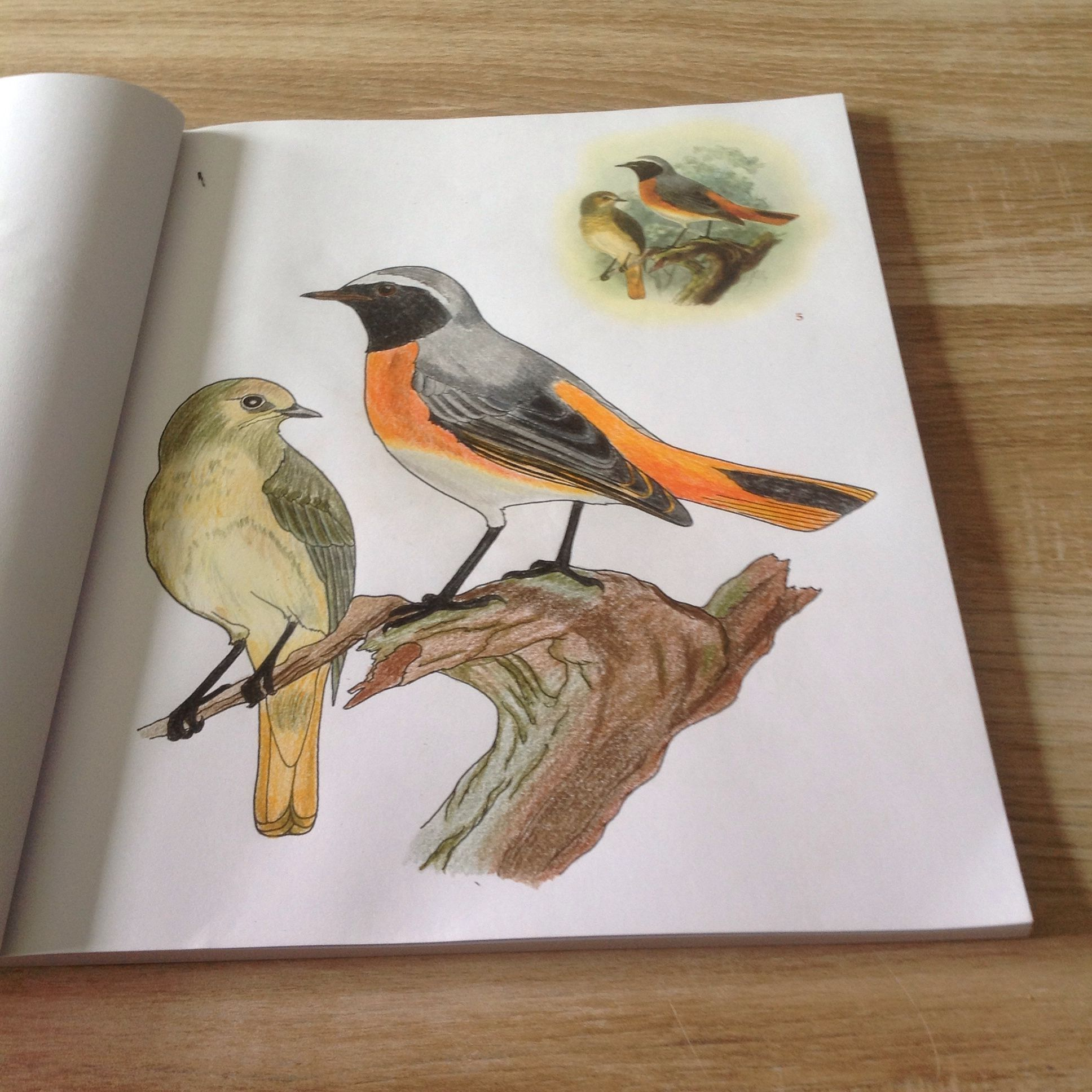 Vogels Kleuren Faber Castell Polychromos Kleuren Kleurboek Kleurplaten