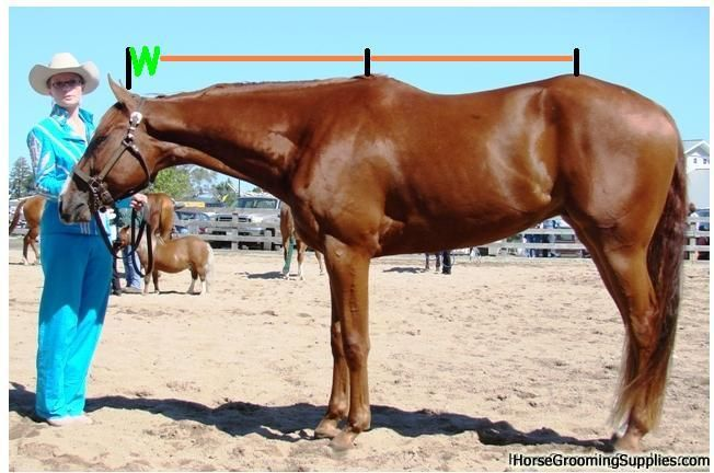 Topic Re-visited, Long Neck | My Horse Forum