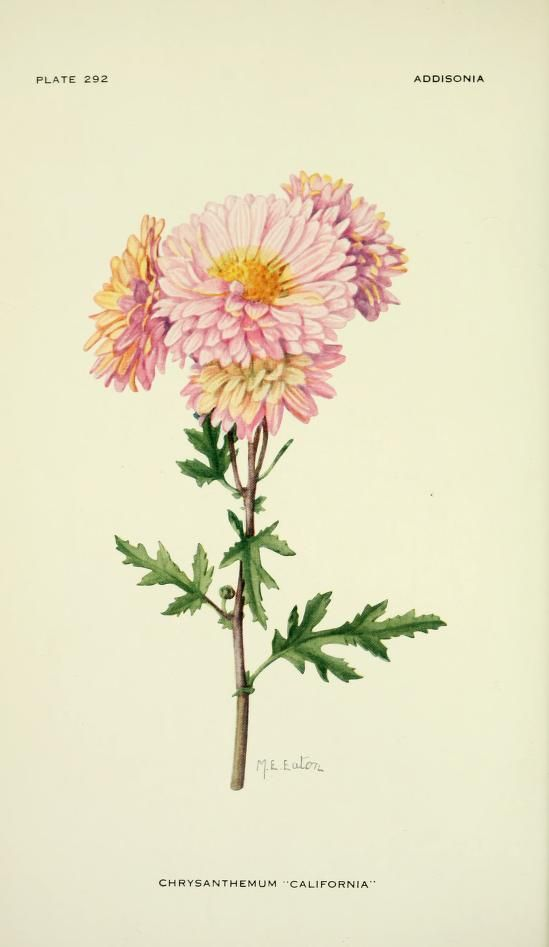 Addisonia : colored illustrations and popular d...