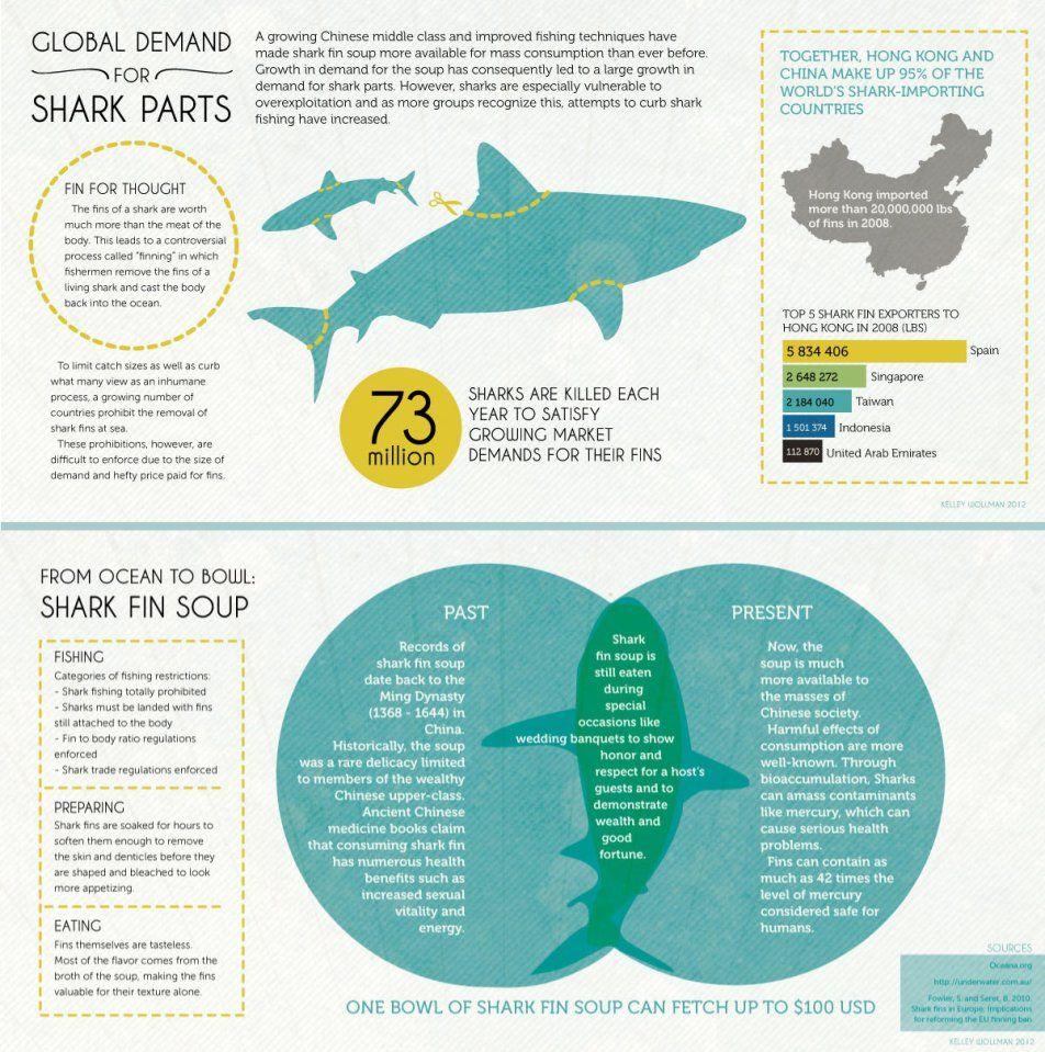 Excelente Anatomía Externa De Un Tiburón Cazón Embellecimiento ...