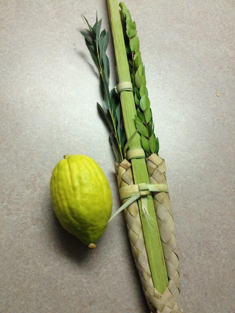 Etrog & lulav Etrog, Furnishings, Vegetables