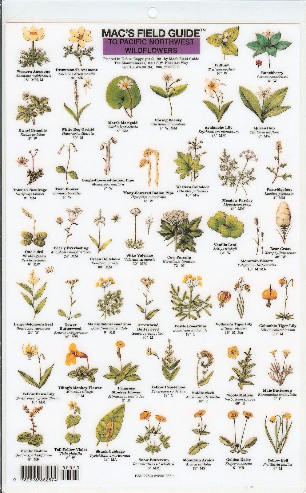 Pin By Kate Vander Griend On Flora Id
