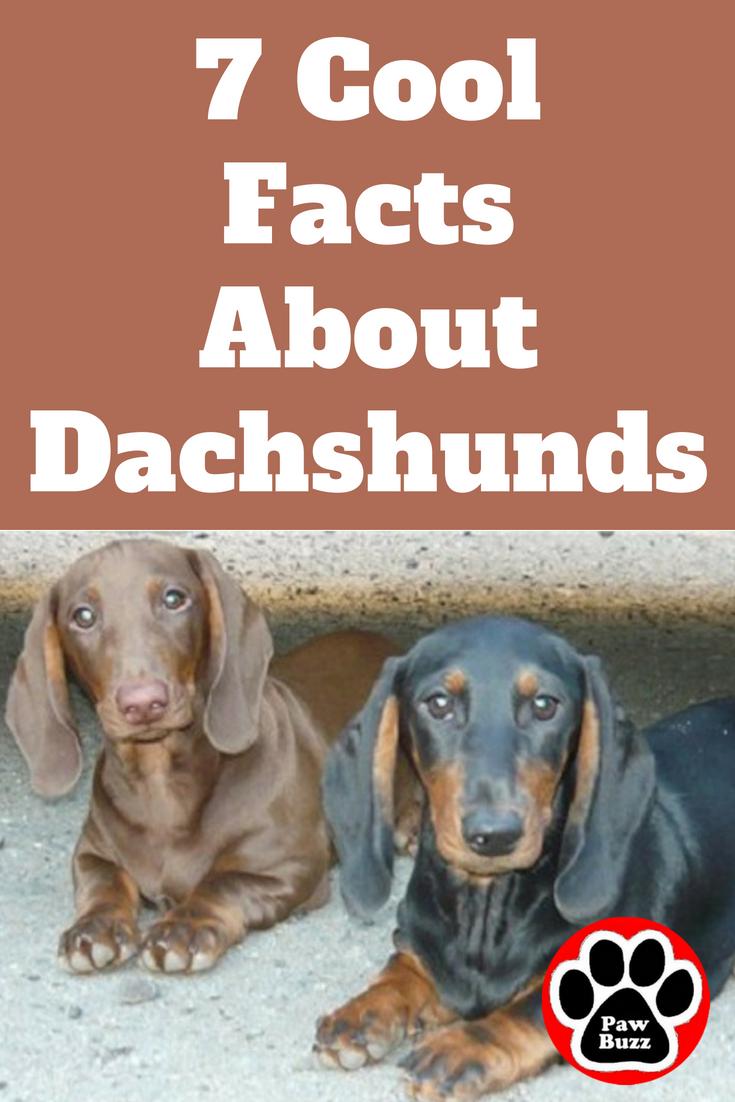 I Had No Idea In 2020 Dachshund Facts Dachshund Puppy Training Dachshund Love