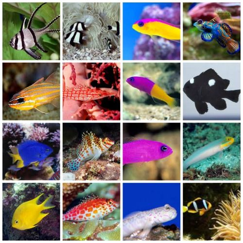 Which marine fish for your new saltwater aquarium for Best white fish