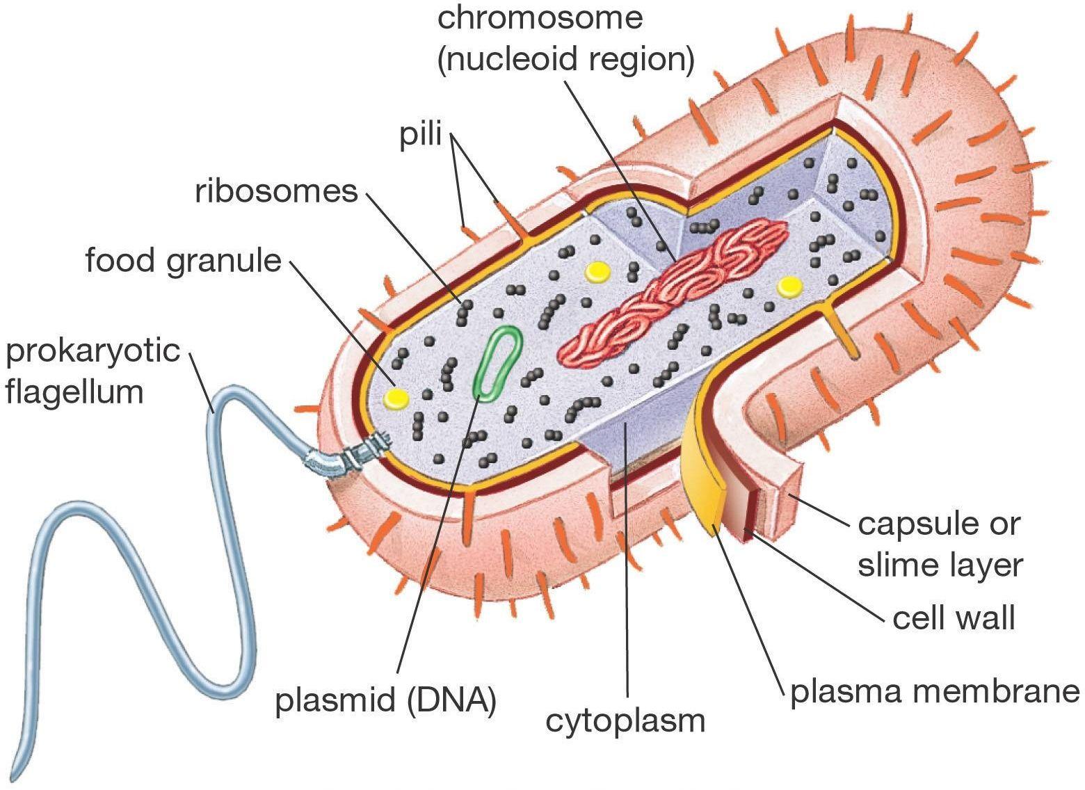 Biology 101: Cells | Prokaryotic cell, Eukaryotic cell, Biology notesPinterest