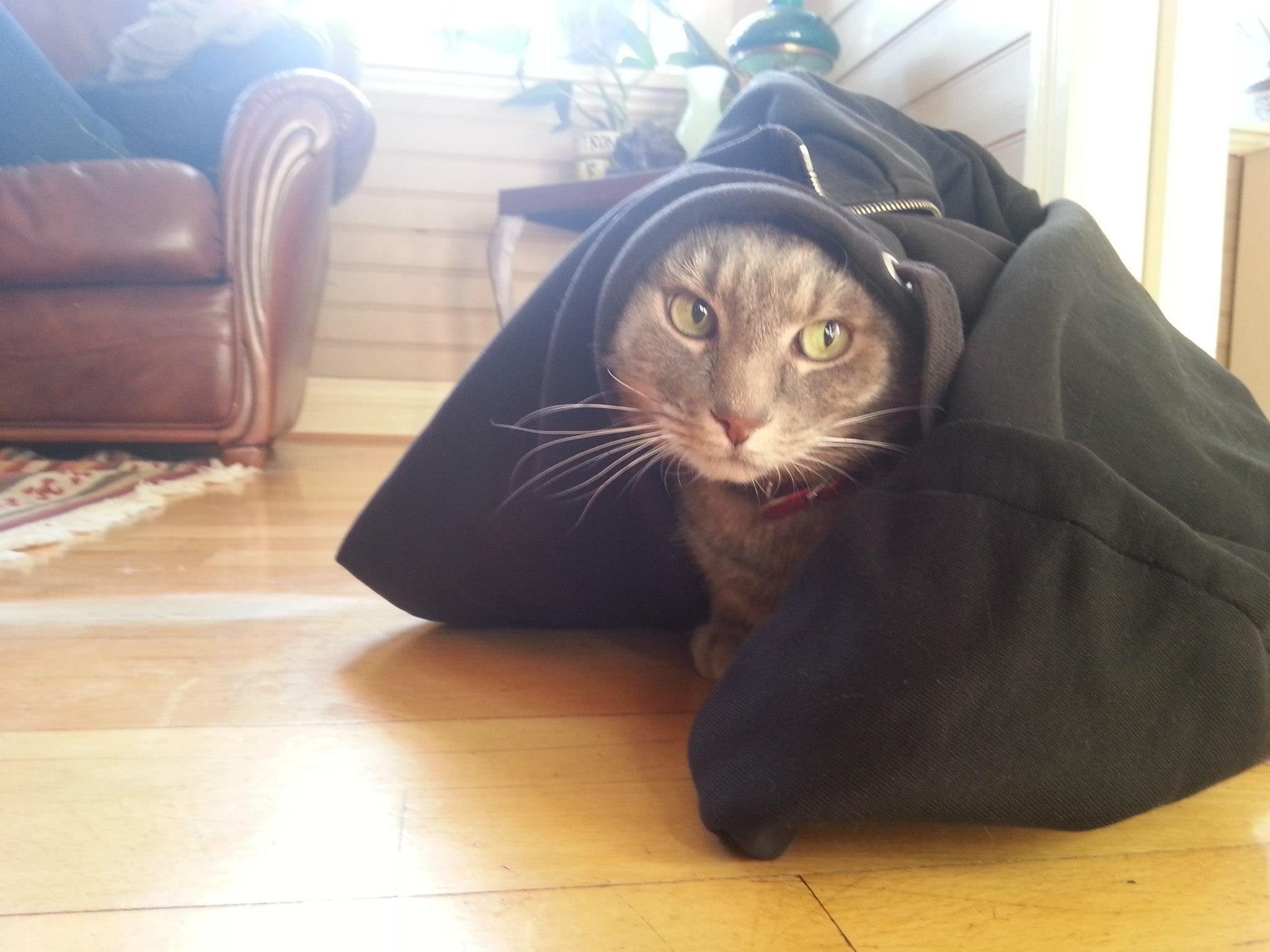 My cat & my sweater