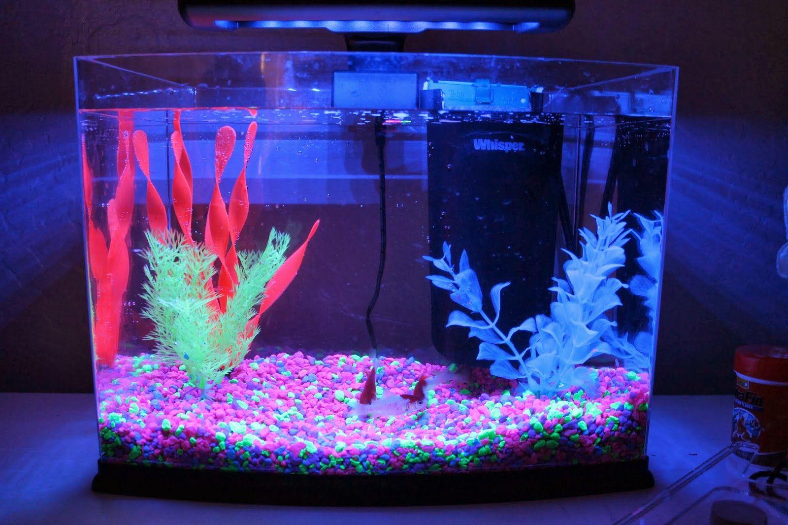 Glow in the dark fish tank xander ideas pinterest for Glow in dark fish