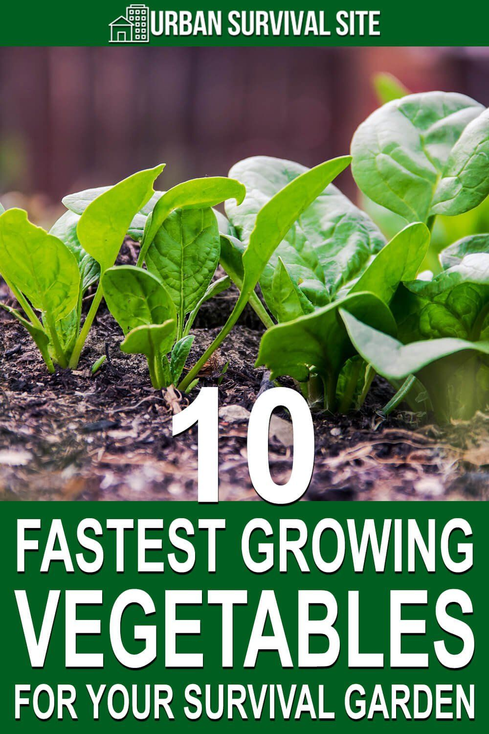 10 Fastest Growing Vegetables For Your Survival Garden In 2020 Fast Growing Vegetables Growing Vegetables In Pots Growing Vegetables In Containers