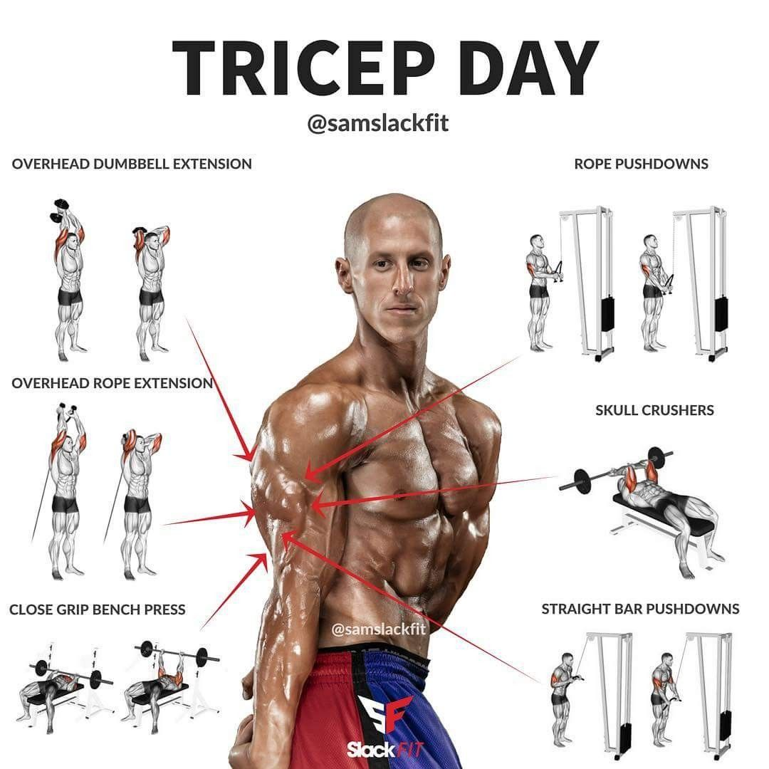 Triceps   Fitness   Pinterest   Workout, Exercises and Gym