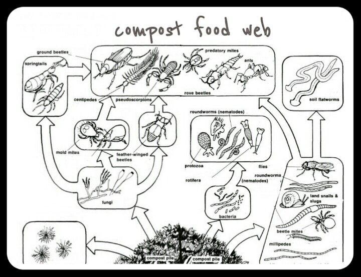 compost food web science life pinterest food webs compost and food. Black Bedroom Furniture Sets. Home Design Ideas