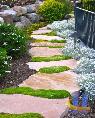 TOP 10 Plants and Ground Cover for Your Paths and Walkways Paths - ideen gestaltung steingarten