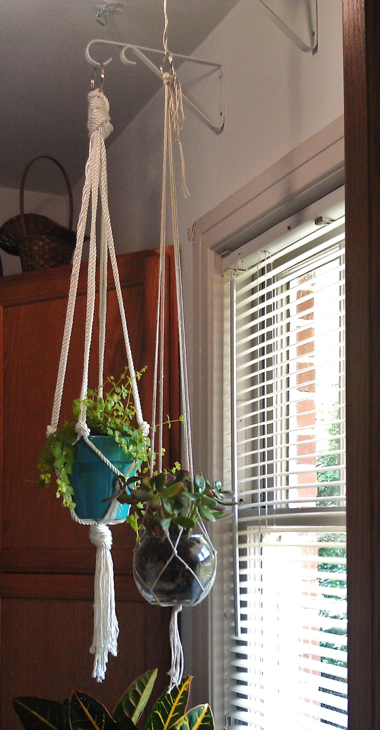 lovely way to hang plants indoors and