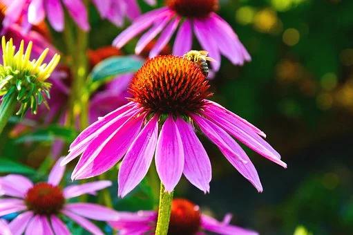 Free Image On Pixabay Flower Violet Heart Orange Bee In 2020 Flower Images Flowers Image