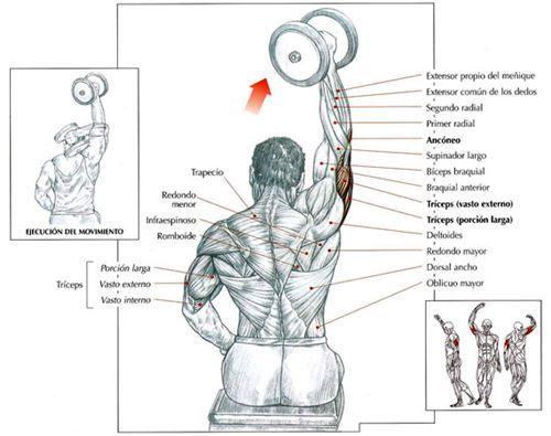 5cosas Com Ejercicios Entrenamiento Con Mancuernas Ejercicios Musculacion