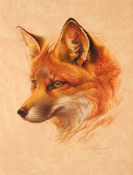Ezra tucker acrylic tea bag painting dessin renard renard peinture renard - Dessin renard ...