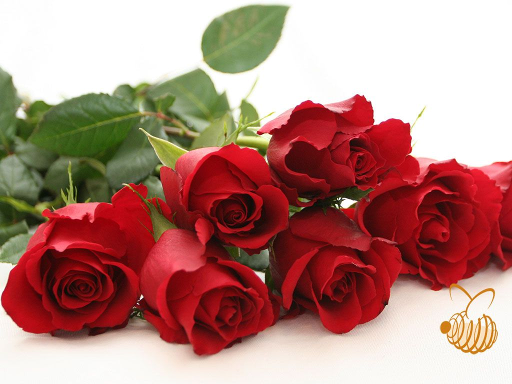 Roses Enjoy The Honor Of Being The Most Popular Flowers In The World