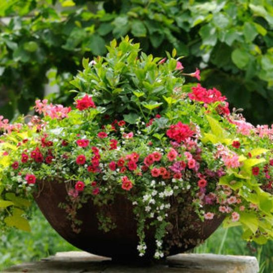 Container Gardening Ideas For Summer: Summer Planters - Google Search